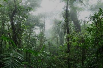 Monteverde Cloud Forest and Coffee Tour Shore Excursion