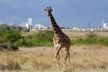 Nairobi National Park Day Trip in Kenya