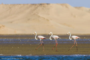 Souss Massa National Park Day Trip...