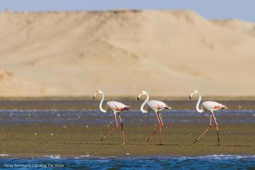 Souss Massa National Park Day Trip from Agadir