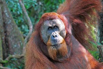 3 Days 2 Nights Bukit Lawang & Orangutans