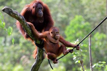 Full-Day Orangutan Explorer