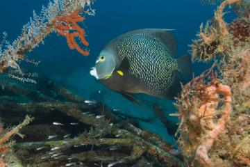 Two Small Group Dives in Grenada