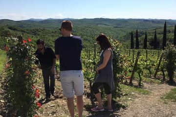 Organic Wine Tour