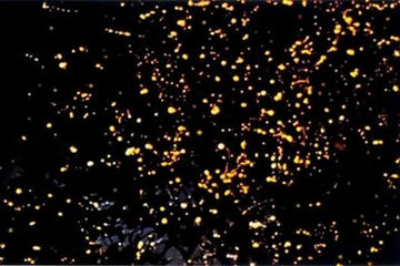 Puerto Princesa Fireflies Watching...