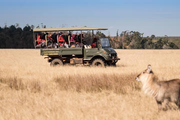 2-Hour Game Drive at the Plettenberg...
