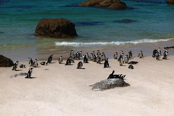 Cape Peninsula Half-Day Sightseeing Tour from Cape Town