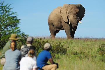 Shamwari Game Reserve 3-Day Walking...