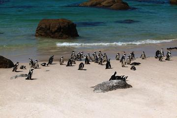 Halbtägige Besichtigungstour der Kaphalbinsel ab Kapstadt