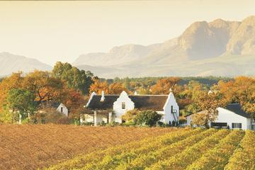 Half-Day Cape Winelands and Wine Tasting Tour from Cape Town