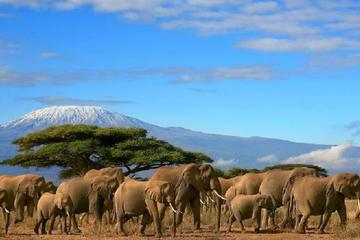 Amboseli National Park from Nairobi Full-Day Tour with Lunch