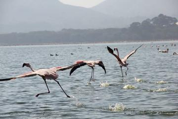 Day Trip to Nakuru National Park from Nairobi