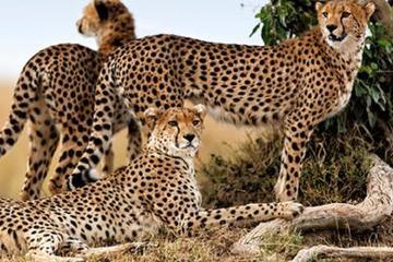 Finch Hattons and Mahali Mzuri Luxury 8-Day Safari from Nairobi