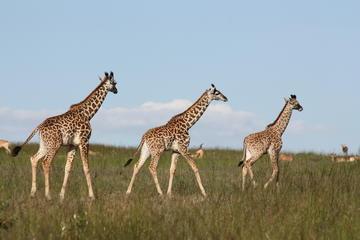 Half-Day Karen Blixen Museum and Giraffe Center Tour from Nairobi
