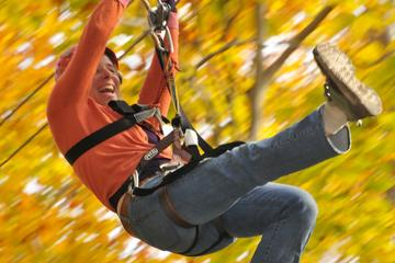 Day Trip Small Group Northern Berkshires Zip Line Canopy Tour near Charlemont, Massachusetts