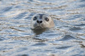 Escapada de un día al Parque Nacional de Snaefellsnes para grupos...