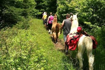 Book Smoky Mountain Padgett Mill Llama Trek on Viator