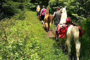 Smoky Mountain Padgett Mill Trek