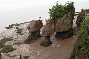 Book Hopewell Rocks Admission on Viator
