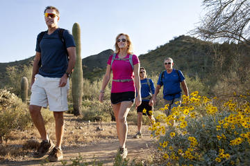 Day Trip Half-Day Sonoran Desert Hiking Tour near Scottsdale, Arizona