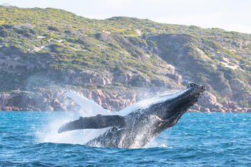Jet Boat Whale Watching Safari from...