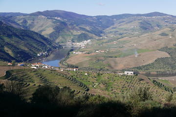 Full-Day Douro Valley Private Wine...
