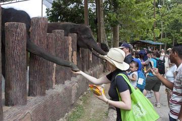 Full Day Batu Caves and Elephant...