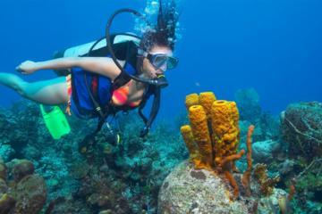 Wave Break Island Certified Scuba Diving on the Gold Coast: Single Dive