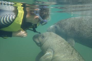 Book Deluxe Manatee Swim Tour on Viator