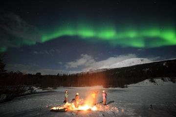 Northern Lights Tour Including Photos Under the Lights in Tromso