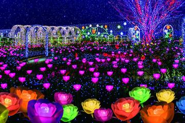 All-you-can-eat Crab, Strawberry Picking and Visit the Ashikaga Flower Park with Illumination Show