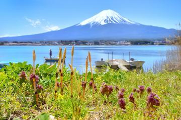 Mt Fuji Day Tour: 5th S…