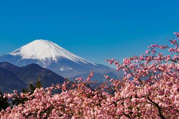 Sakura Cherry Blossom Festival and...