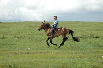 Visit Mongolian nomad family