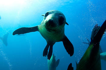 Montague Island Snorkel With Seals Trip from Narooma
