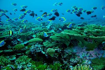 Maldives Sun and Snorkel Including...