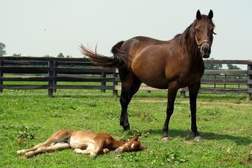 Visita a la grana de caballos...