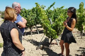 WINE AND FOOD TOUR in a winery among the vineyards