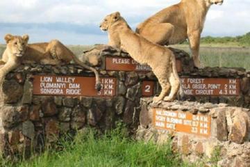 Nairobi National Park Half-Day Tour