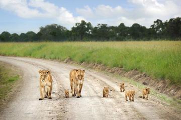Nairobi National Park tour David...