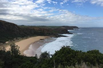 1 Day Phillip Island Bass Coast Walk Sightseeing and Penguins Tour
