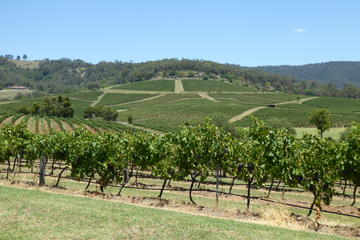 Hunter Valley Wine and Wildlife Tour from Sydney or Hunter Valley...