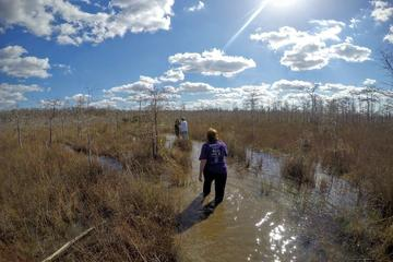 Swamp Walk with a Naturalist and Ten Thousand Islands Boat Tour
