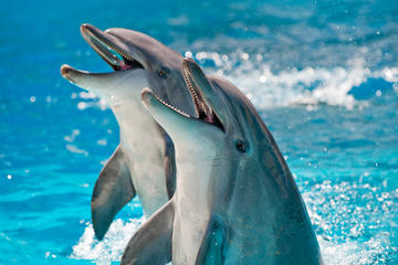 Book Private Dolphin Cruises in Orange Beach on Viator
