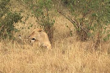 2 Days 1 Night Amboseli National park  Luxury safari package