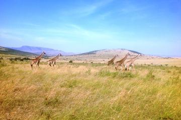 2 days maasai mara flying safari