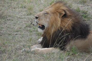 5 Days Tsavo East ,Tsavo west, Amboseli, Nairobi safari