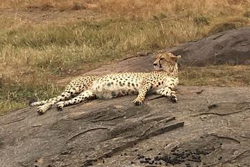 7 Days Maasai mara, Naivasha, Nakuru...