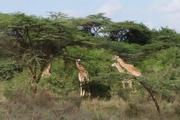 ABERDARE NATIONAL PARK DAY TOUR FROM NAIROBI