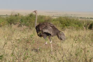 SAMBURU NATIONAL PARK DAY TOUR FROM NAIROBI